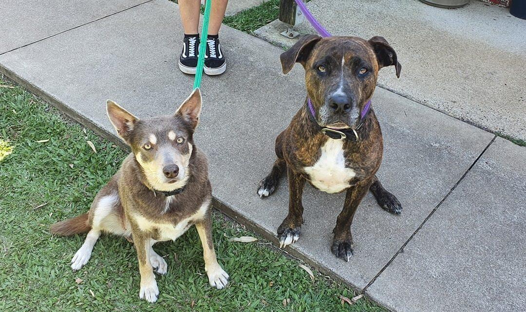 Dixie & Kylo